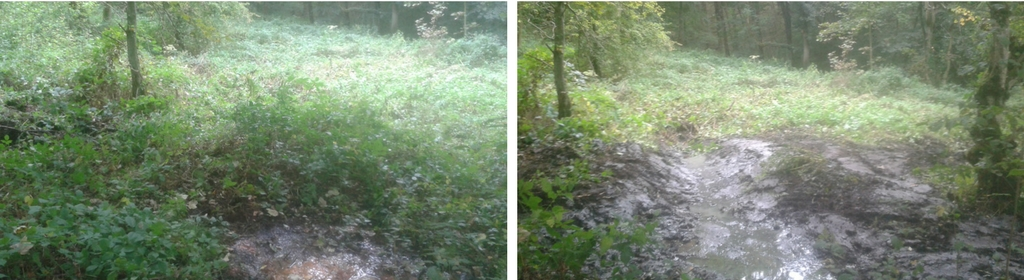 Willow Tit Project - before and after drainage work
