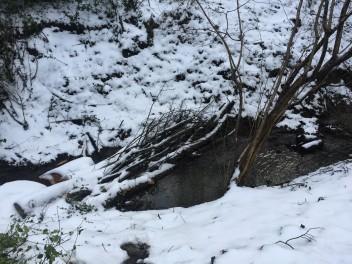 Leaky Dam1