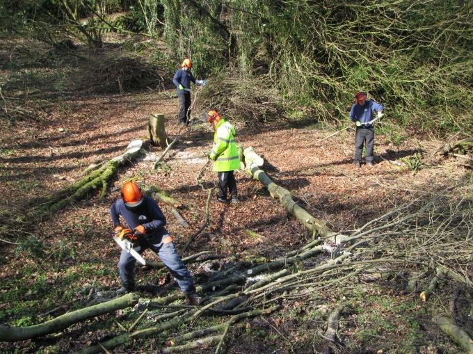 Tree Felling March 2017