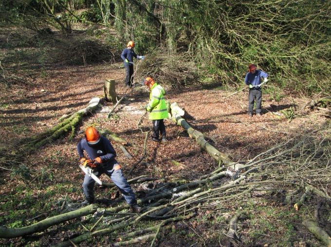 Tree Felling March 2017