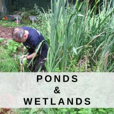 Ponds and Wetlands
